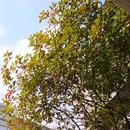 杉の宮マンション内側からは木々が見えます