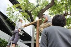 新高砂マンションにツリーハウス出現