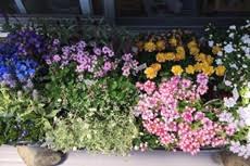 茶山ゴコで花壇作り